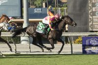 War Front – Lyric, by Woodman Broken at Winter Quarter At 4: Rodeo Drive S.-G1, John C. Mabee S.-G2, 3rd Breeders' Cup Filly and Mare Turf-G1 At 5: Rodeo Drive S.-G1, 3rd Gamely S.-G1 Owner: Ramona Bass