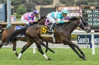 Smart Strike – Charm the Giant (IRE), by Giant's Causeway At 5: John Henry Turf Championship S.-G2 Breeder: Ron and Deborah McAnally