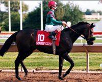 Cozzene – Star Gem, by Pia Star KEESEP04 $35,000 Choice H.-G3, Nureyev S., Kelso H.-G3, San Gabriel S.-G3, San Marcos S.-G2, Manhattan S.-G2, Caesars International H.-G2, Arlington Million-G1, Man O War S.-G1 Breeder: Double J Farm
