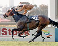 Arch – Lonely Fact, By Known Fact KEESEP01 $70,000 Horse Chestnut S.-G1, Johannesburg Sprint-G3, Camellia S.-G3, Nomads Renounce S. Breeder: Don Robinson and Dennis H. Marks 2005 Horse of the Season in South Africa