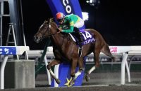 Speightstown – Akilina, by Langfuhr At 2: Undefeated in four starts in Japan, Zen-Nippon Nisai Yushun (Jpn-1), Edelweiss Sho (Jpn-3) At 3: 2nd NHK Mile Cup-G1 At 4: Sparkling Lady Cup-L Breeder: Richard Leahy/Oak Bluff Stables